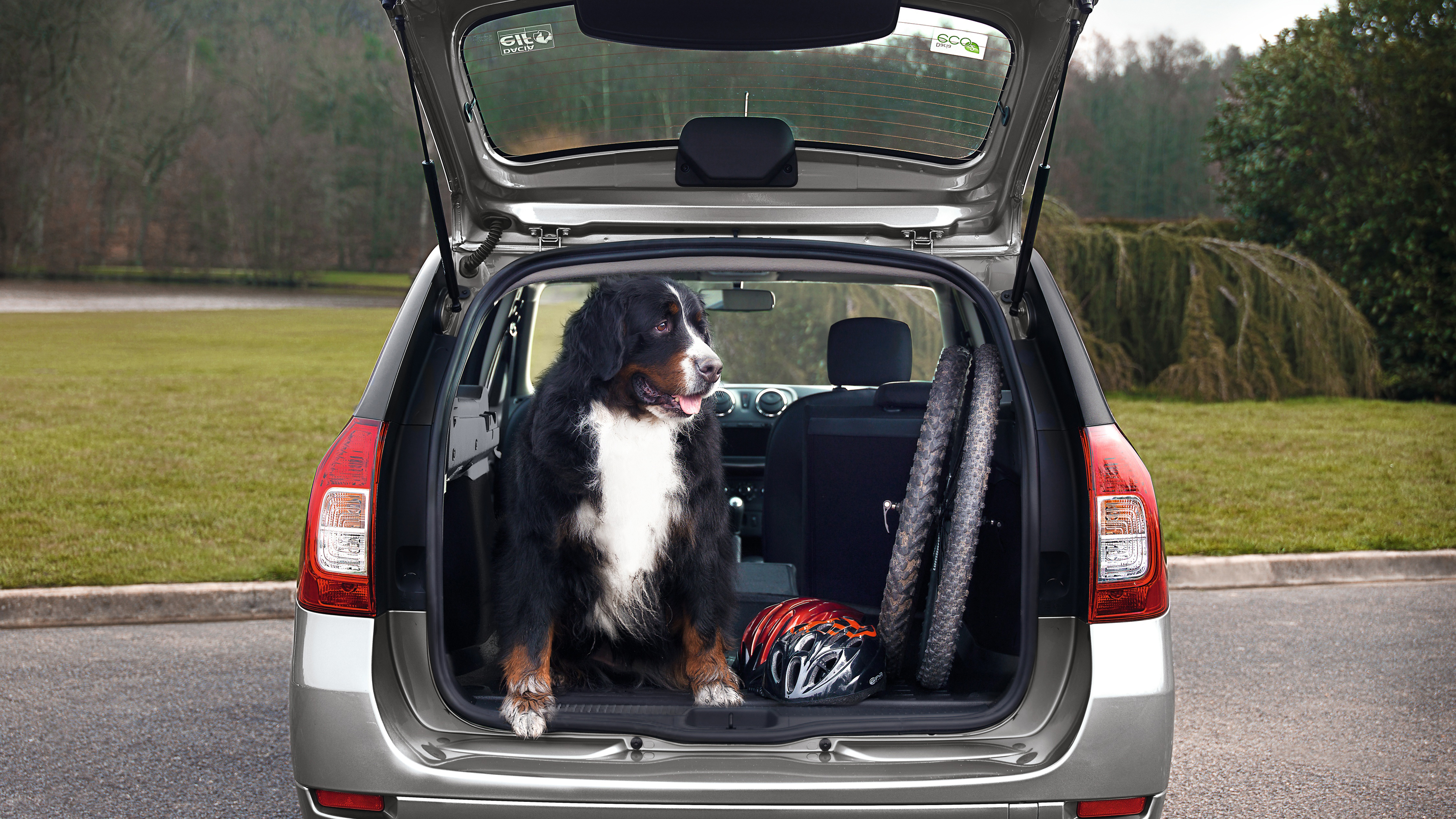 Dacia-logan-mcv-dog-in-boot.jpg